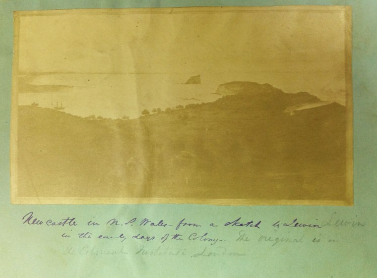 Photograph of original Bauer painting, 1804. Annotation: