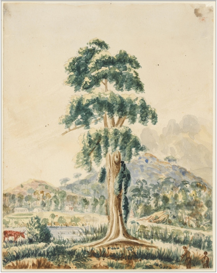 Item 17: Boorel Port Stephens, ca. 1824-1836 / Robert Hoddle (Courtesy of the State Library of NSW)