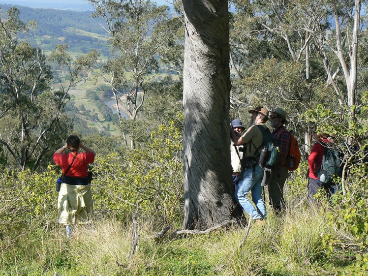 Coal River Working Party on location in 2009, in search of two carved trees from Barrallier's 1801 expedition up the Hunter Valley